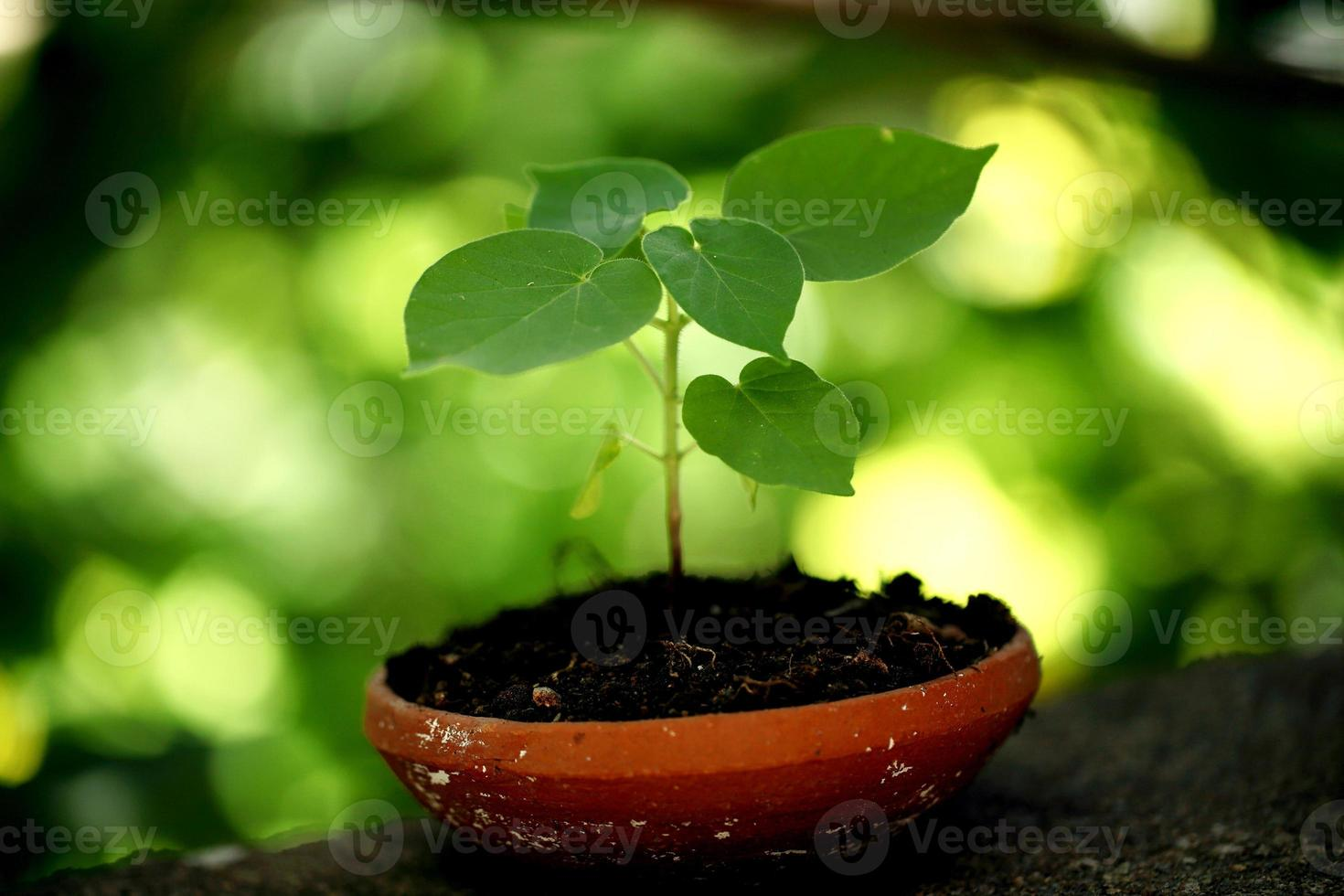 Plant growing in a small pot photo