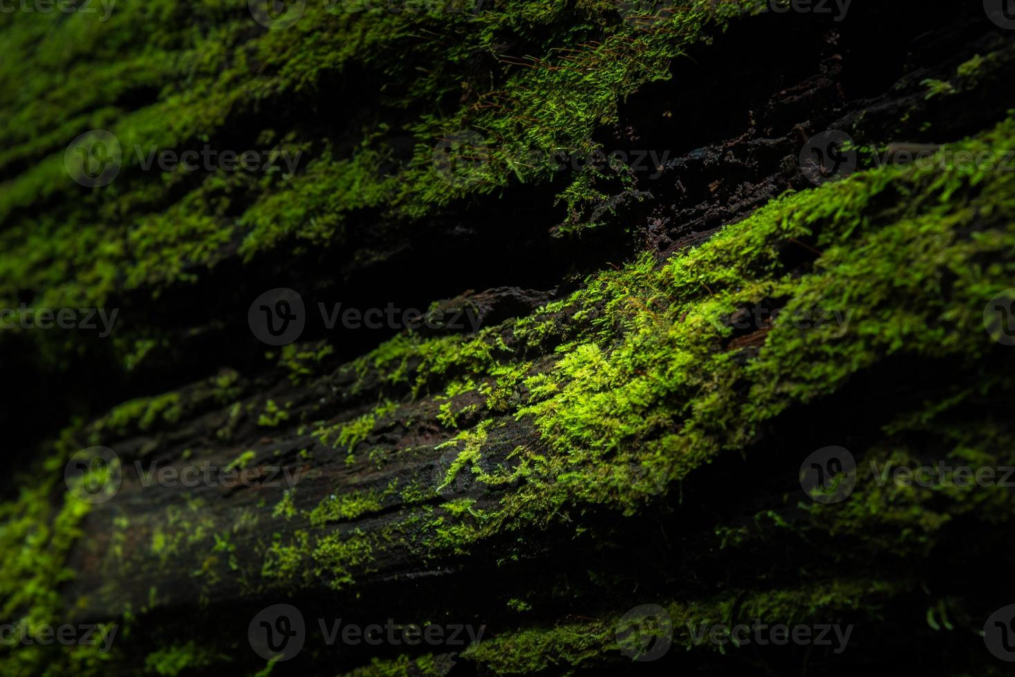 The moss photo