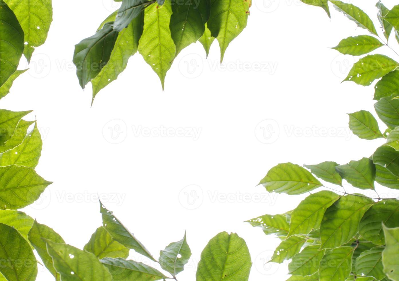 Marco de hojas verdes sobre fondo blanco. foto