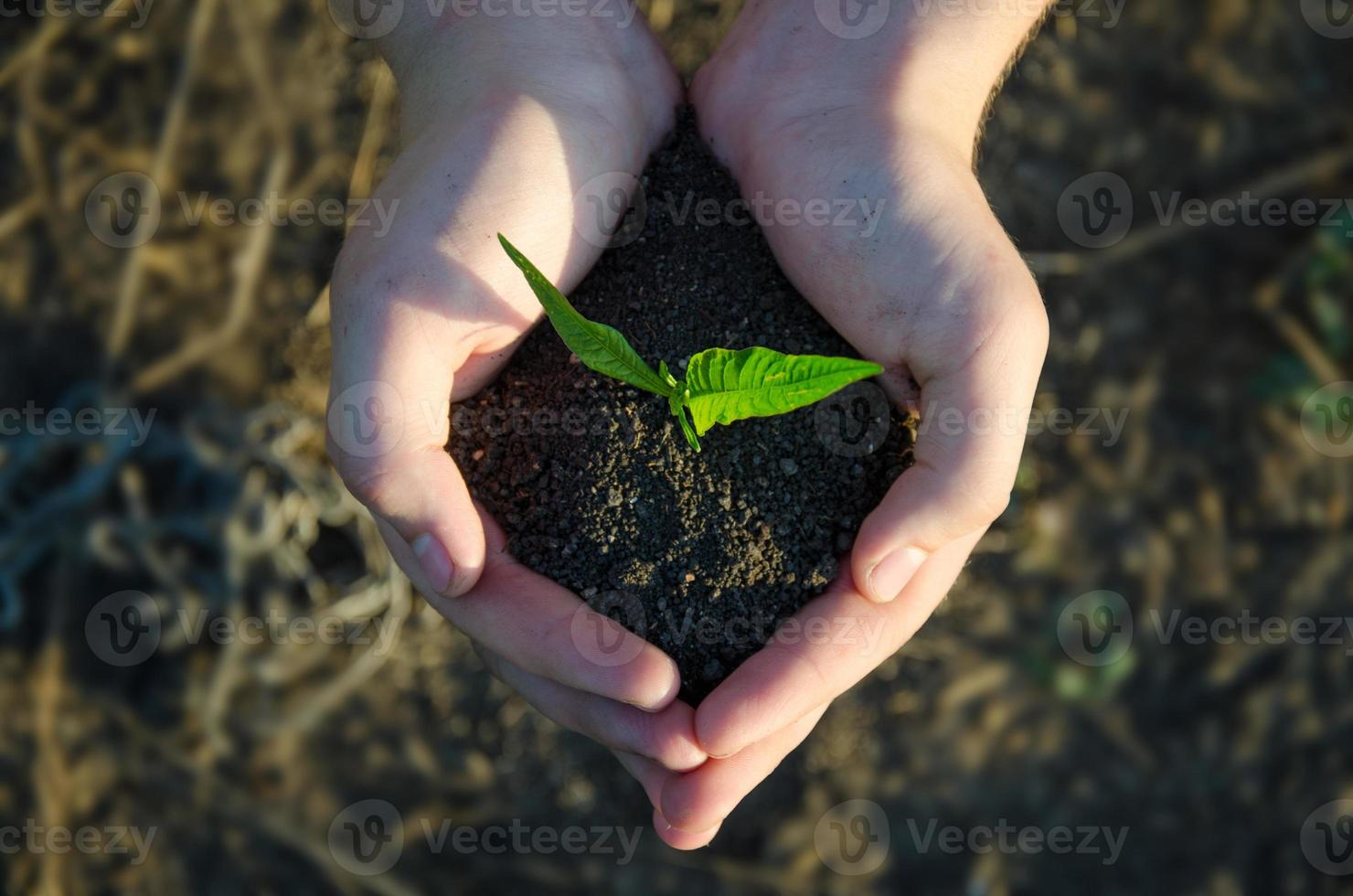 Hands holding seedling with soil on green bokeh blackground photo