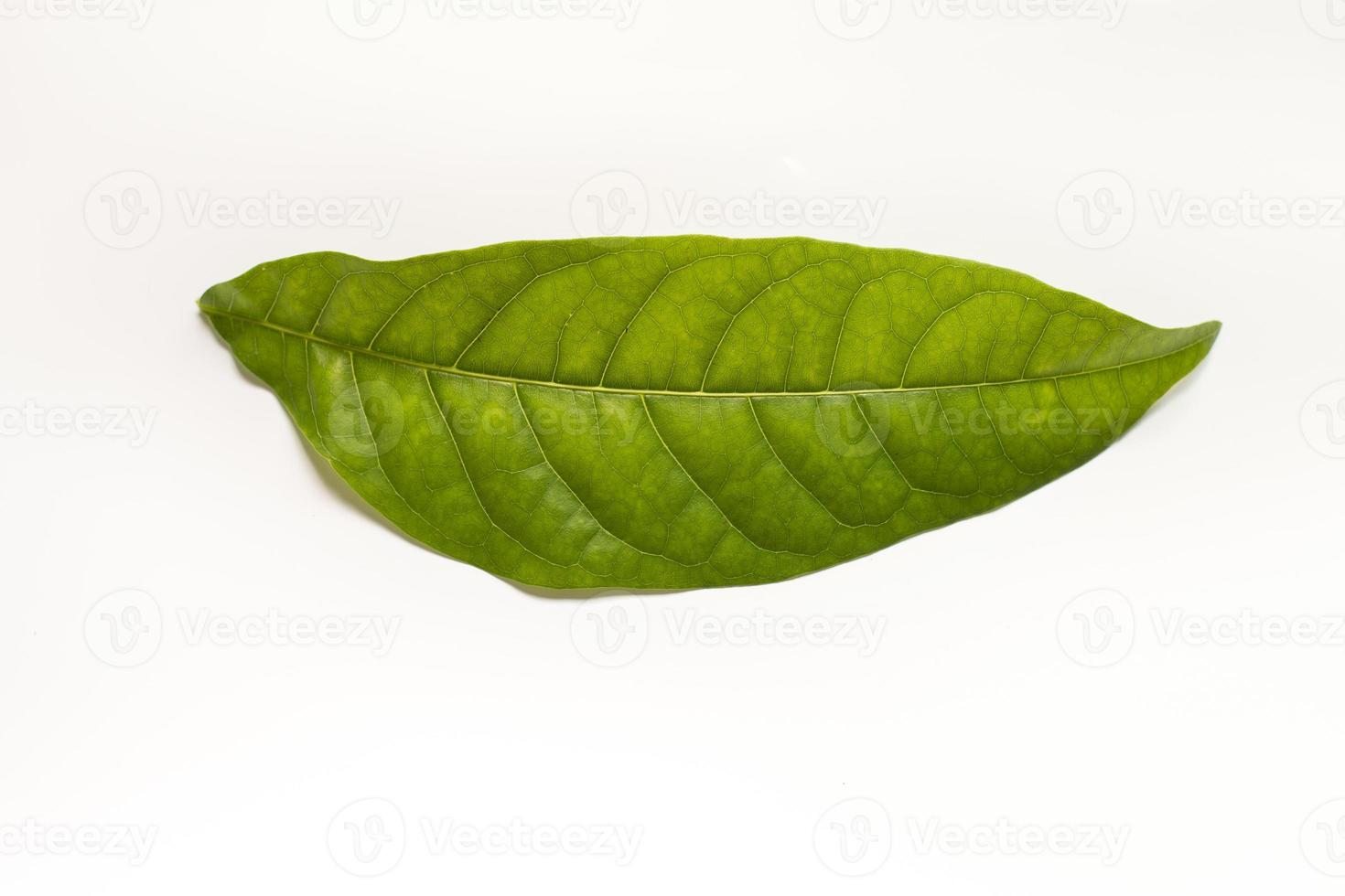 Green leaf. photo