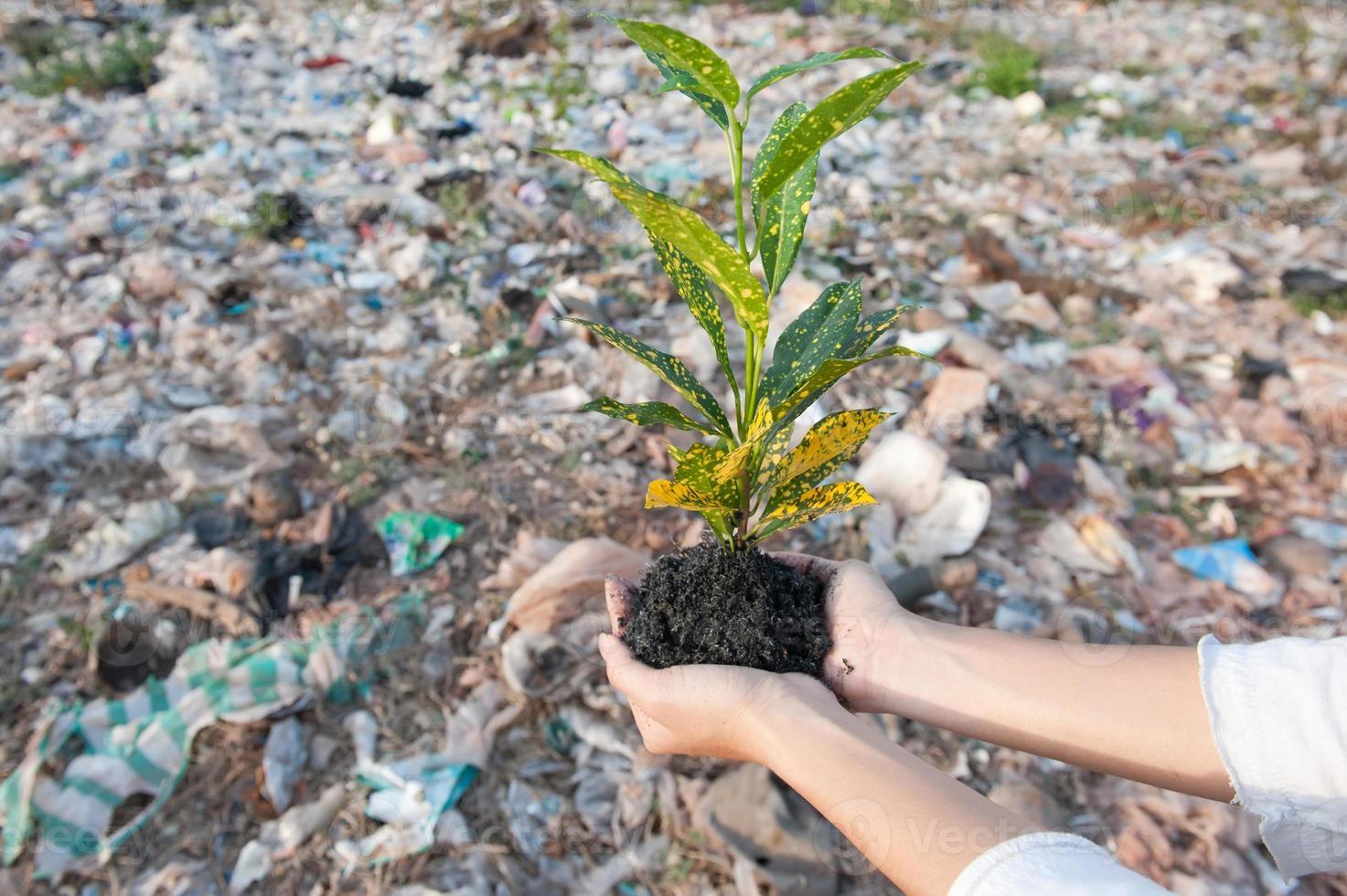 salvar el medio ambiente foto
