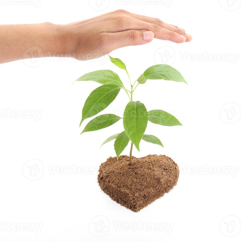 manos protegiendo planta bebé foto