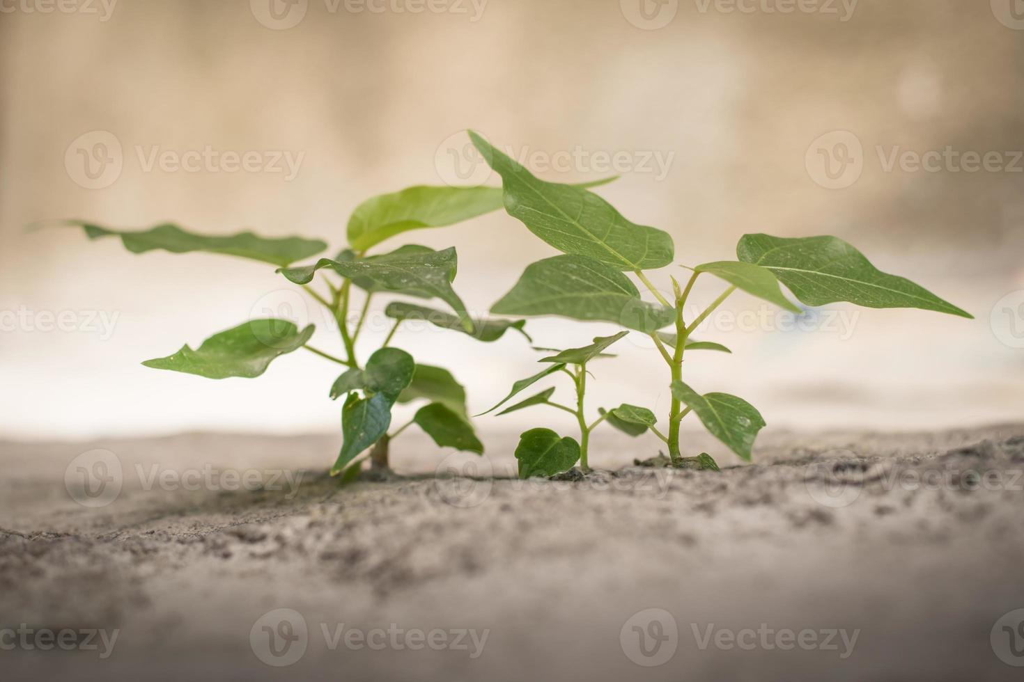 Green seedlings photo