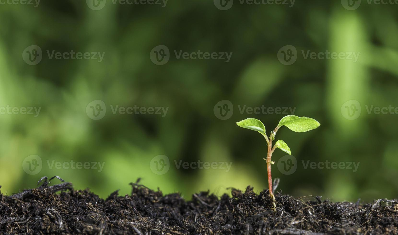 Closeup of seedling in soil against green background photo