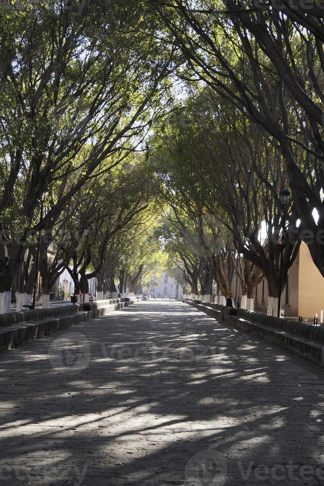 Paseo peatonal photo