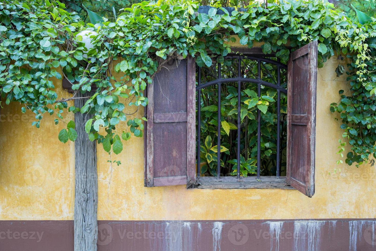 Yellow fence in countryside with overgrown vine photo