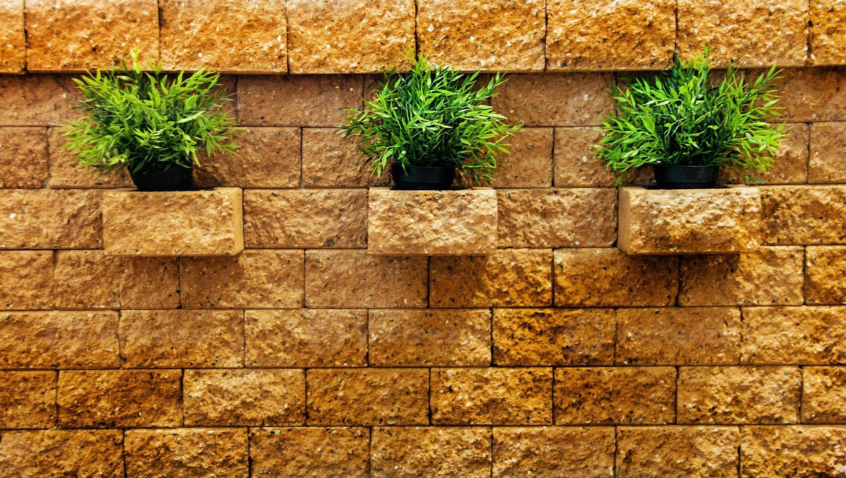 Tres matas de hierba verde en la pared de ladrillo foto