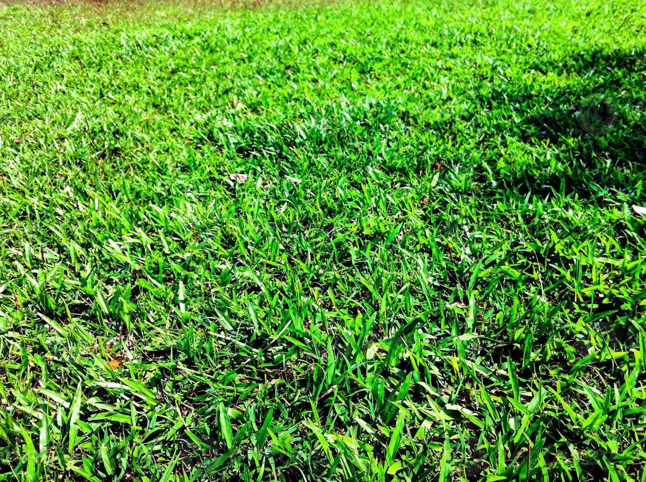 Green Lawn in garden beautiful photo