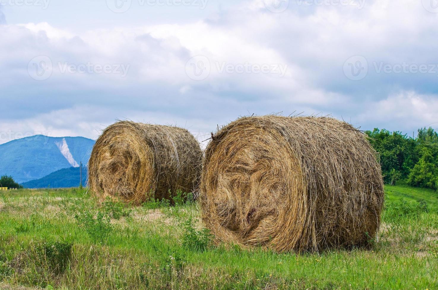 campo de pacas de heno. foto