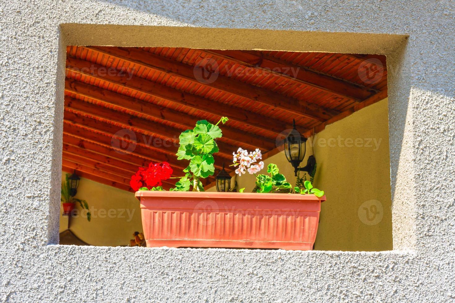 Flowers in flowerpot on wall photo