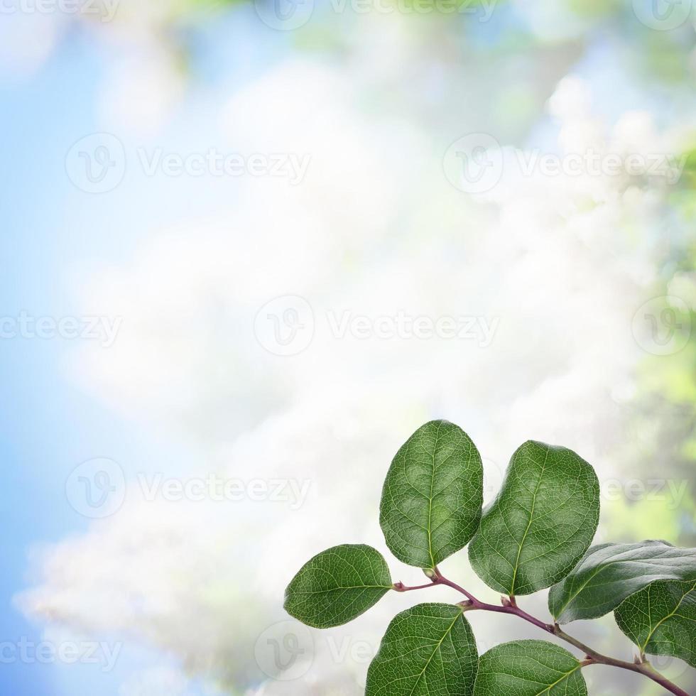 raíz de fondo celestial con hierbas frescas foto