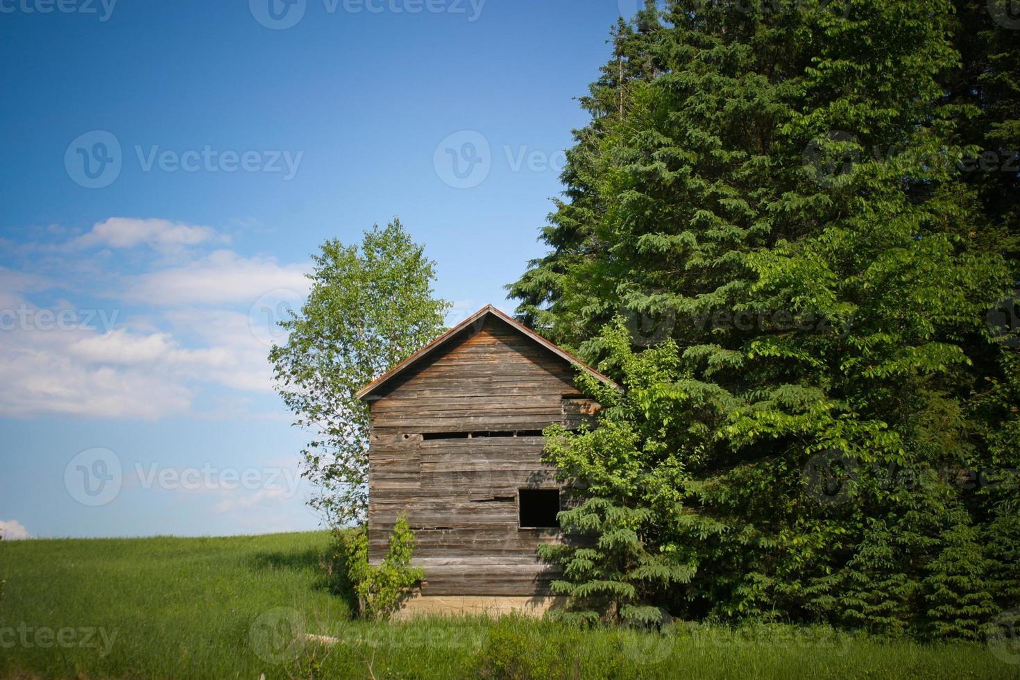 Pequeña cabaña de madera vieja además de árboles verdes foto