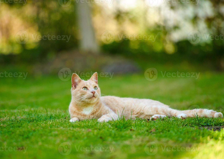 gracioso gato pelirrojo foto