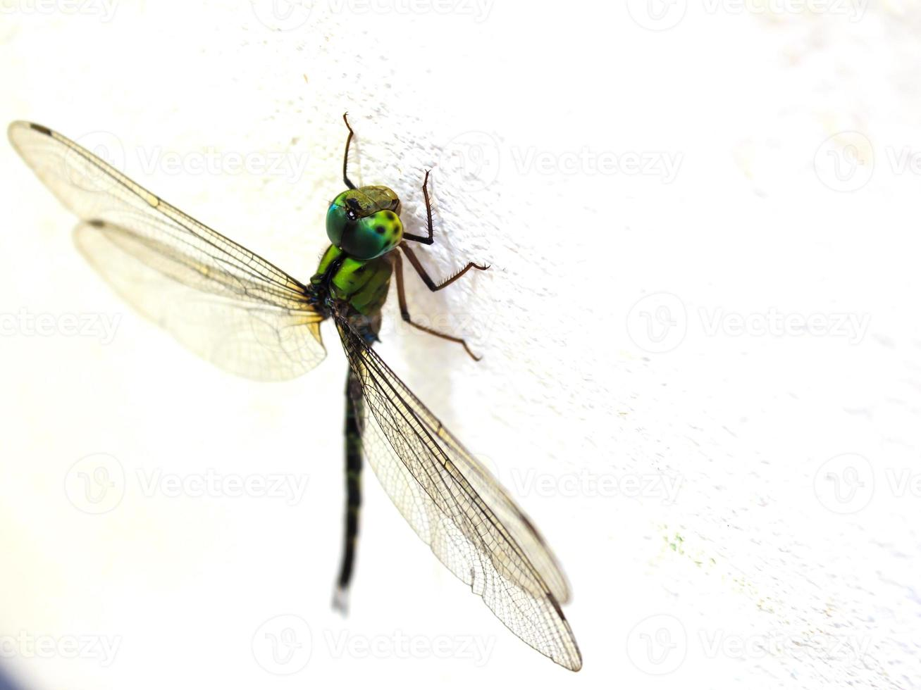 Dragonfly on the wall photo