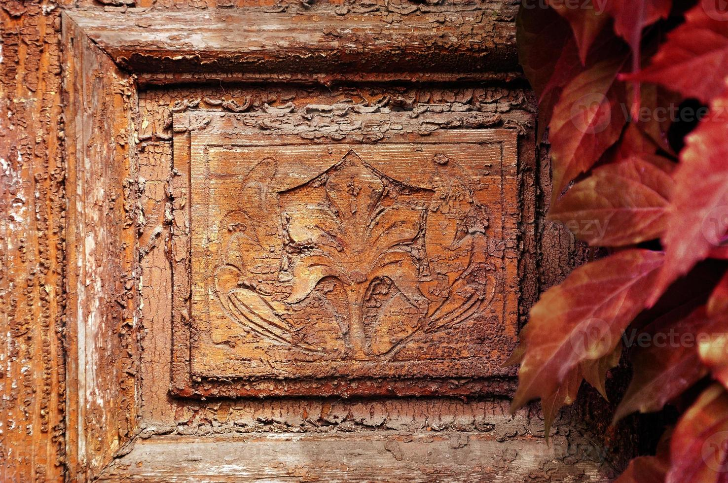 Detail of vintage door with leaves of wild grapes photo