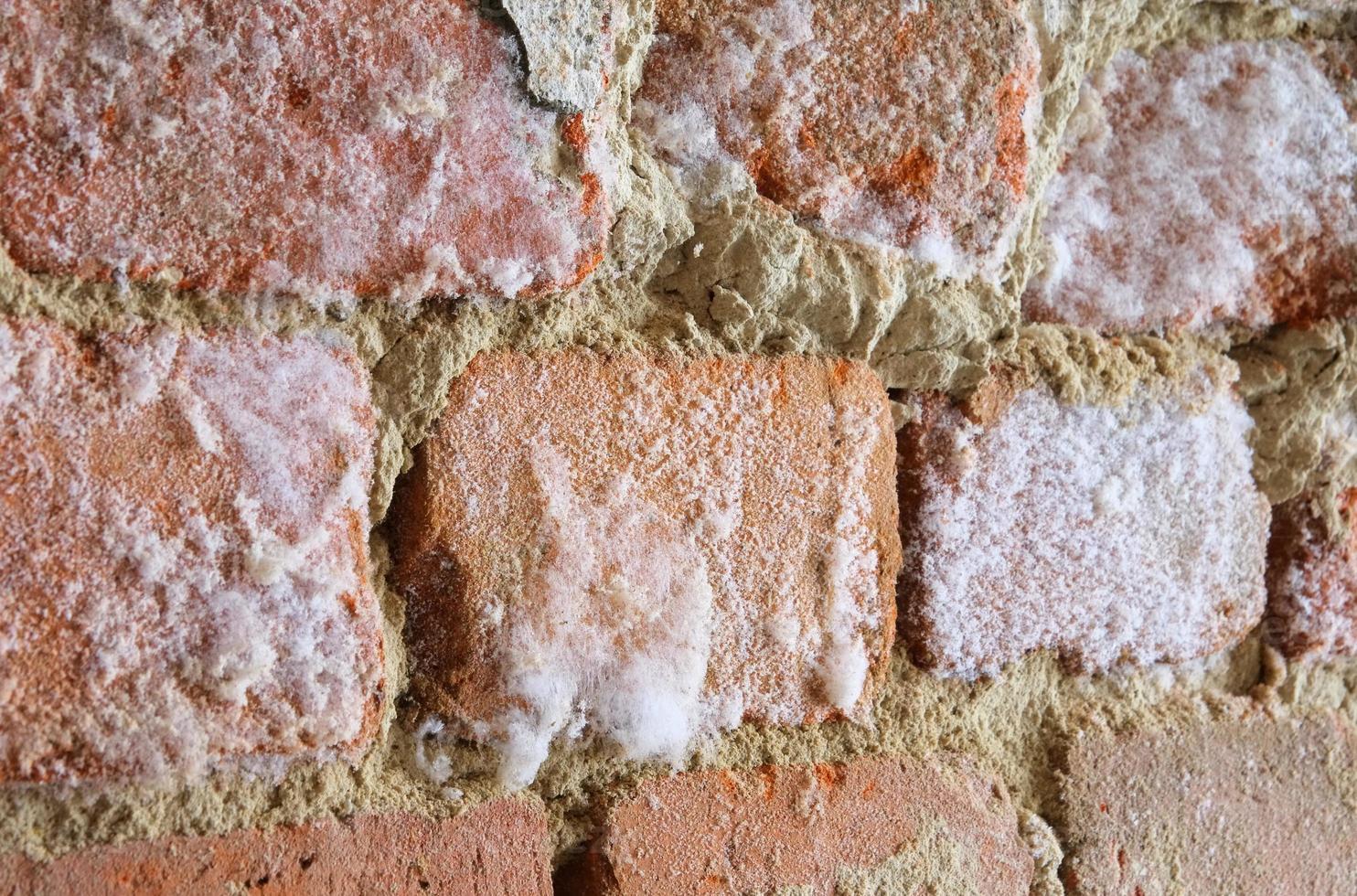 pared con hongo de moho foto