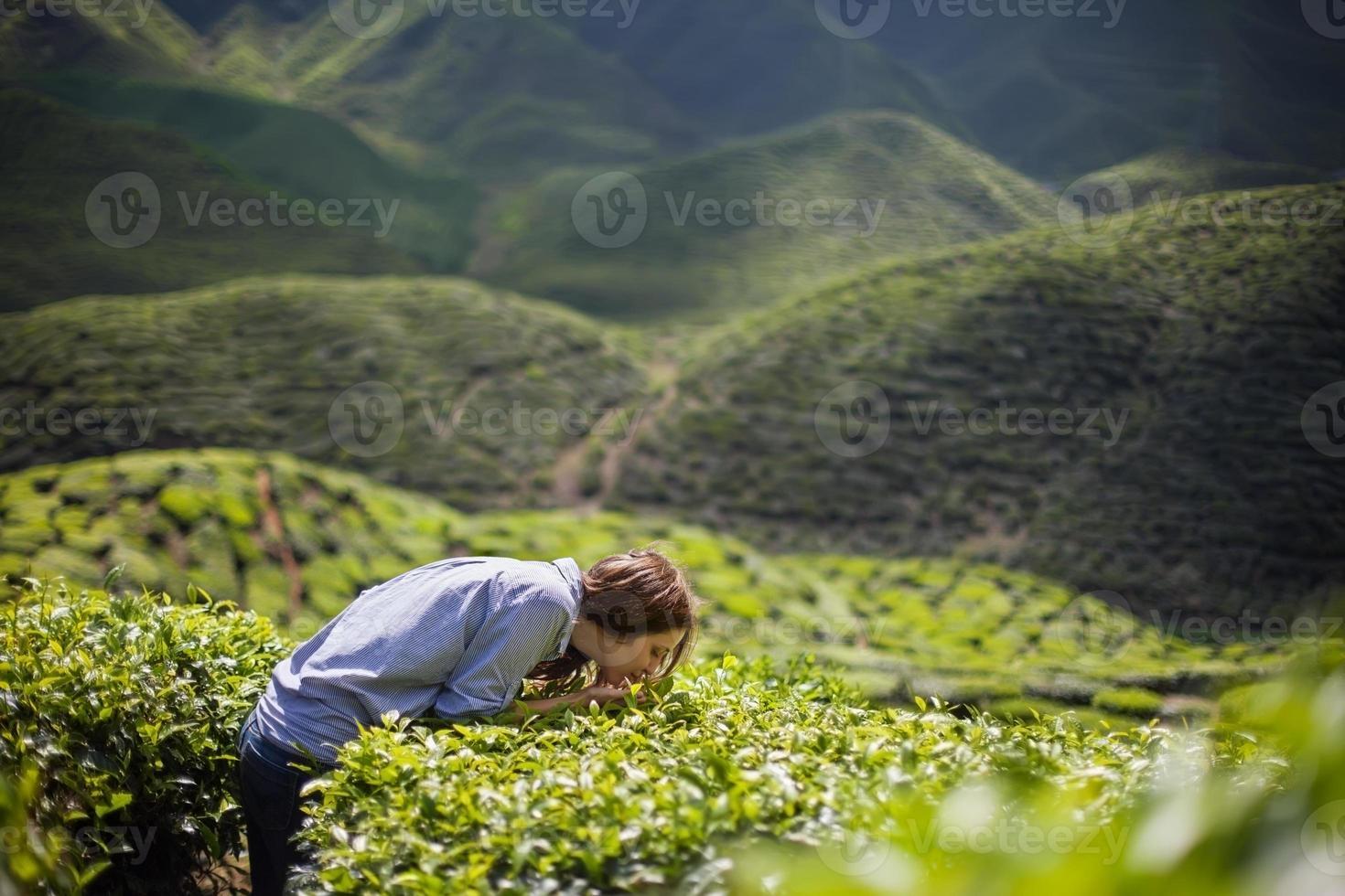 mujer oliendo hojas de te foto