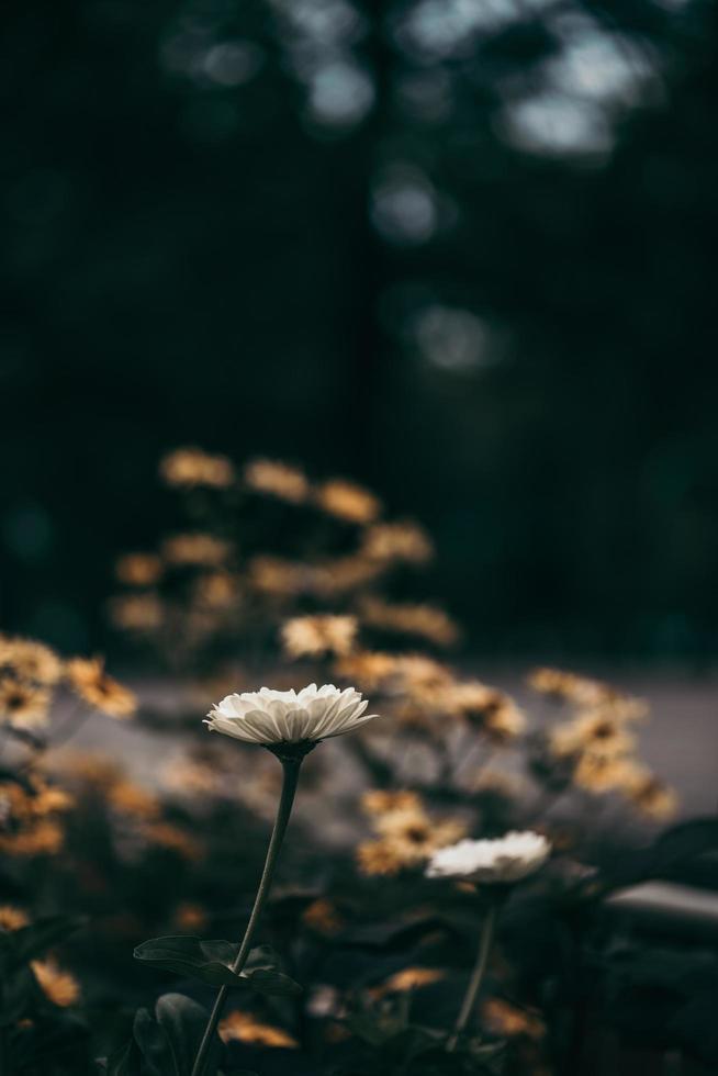 campo de flores en la noche foto