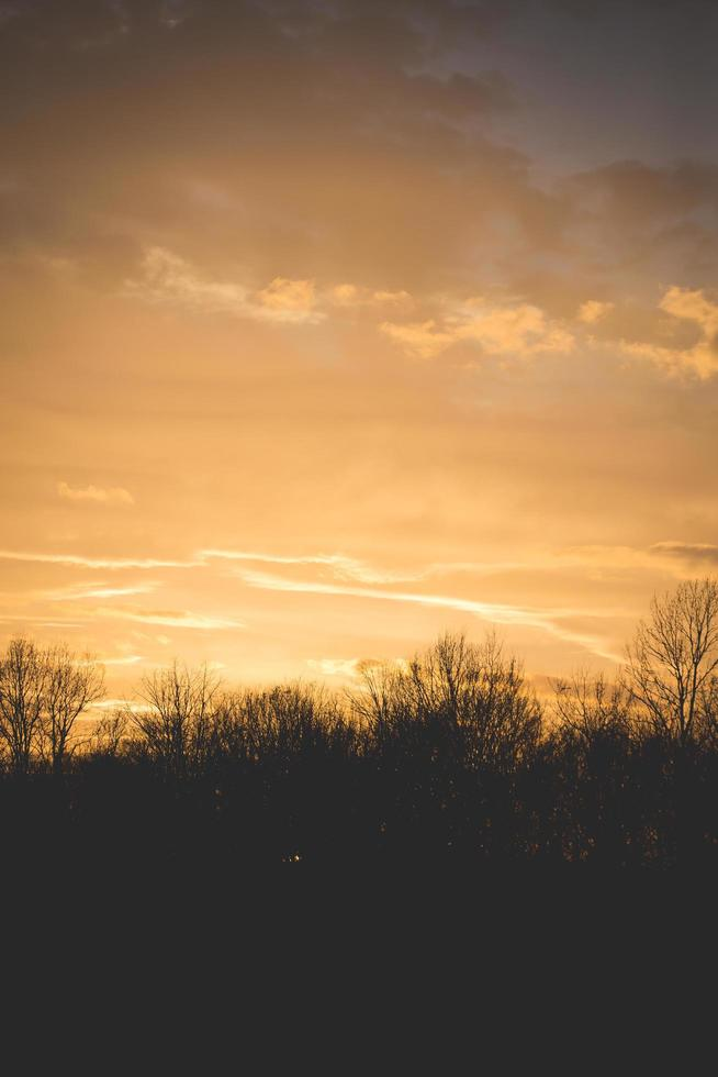Silhouette of plants against orange cloudy sky photo