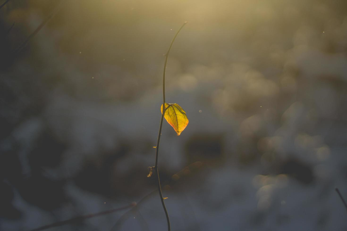 Withered plant with yellow leaf photo