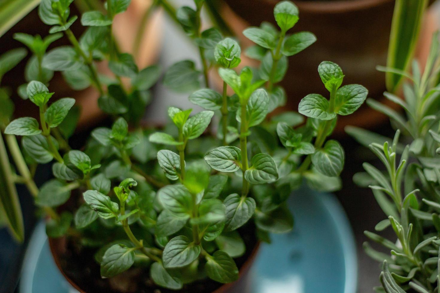 Selective focus of green plant photo
