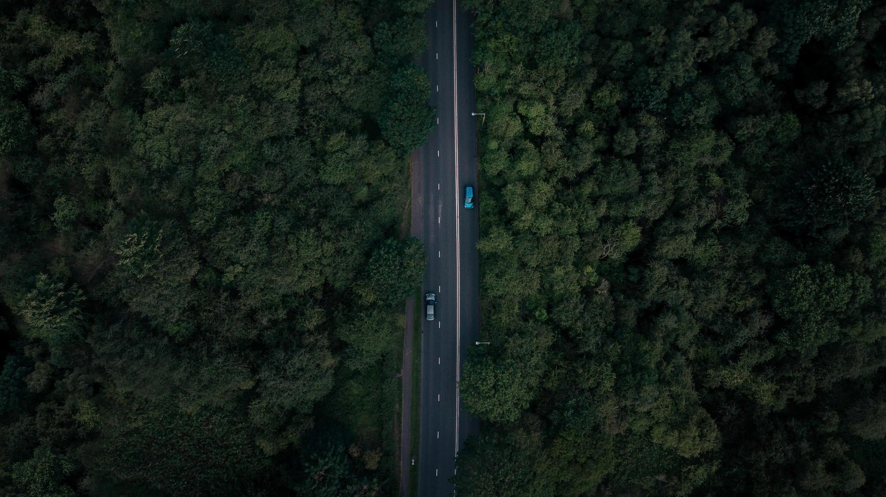 Aerial view of road surrounded by trees photo