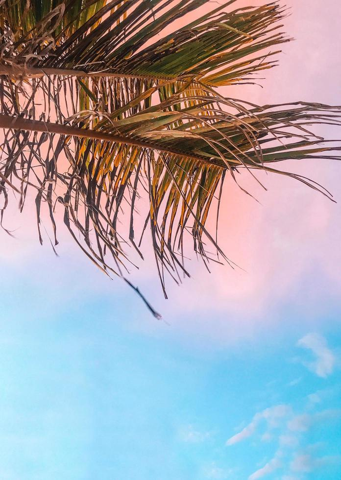 Palm tree under sunset sky photo