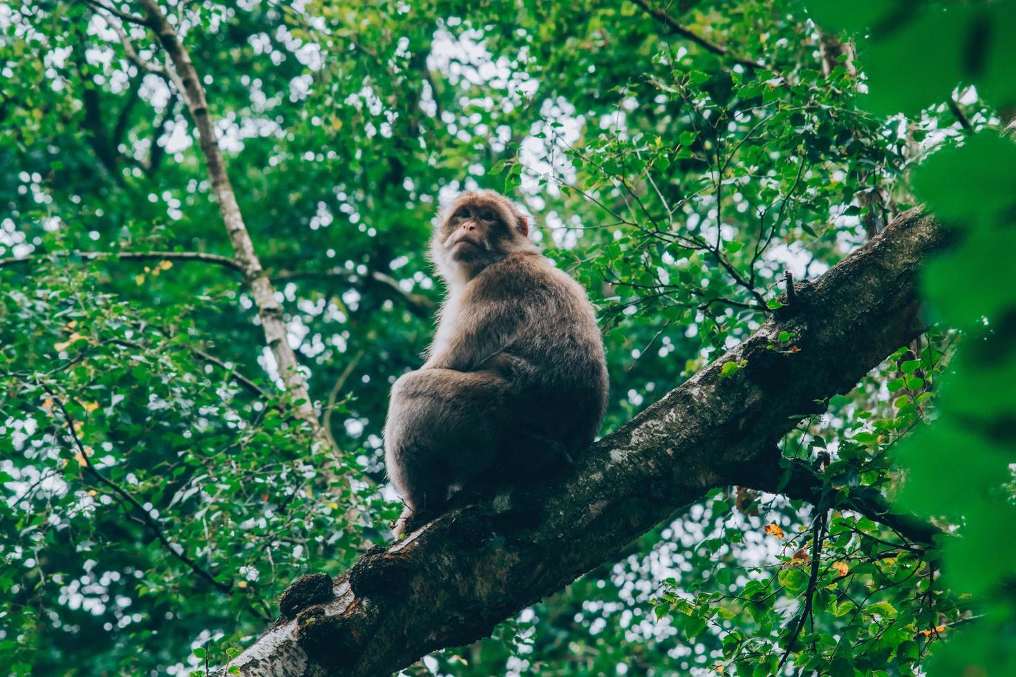 mono en la rama de un árbol foto