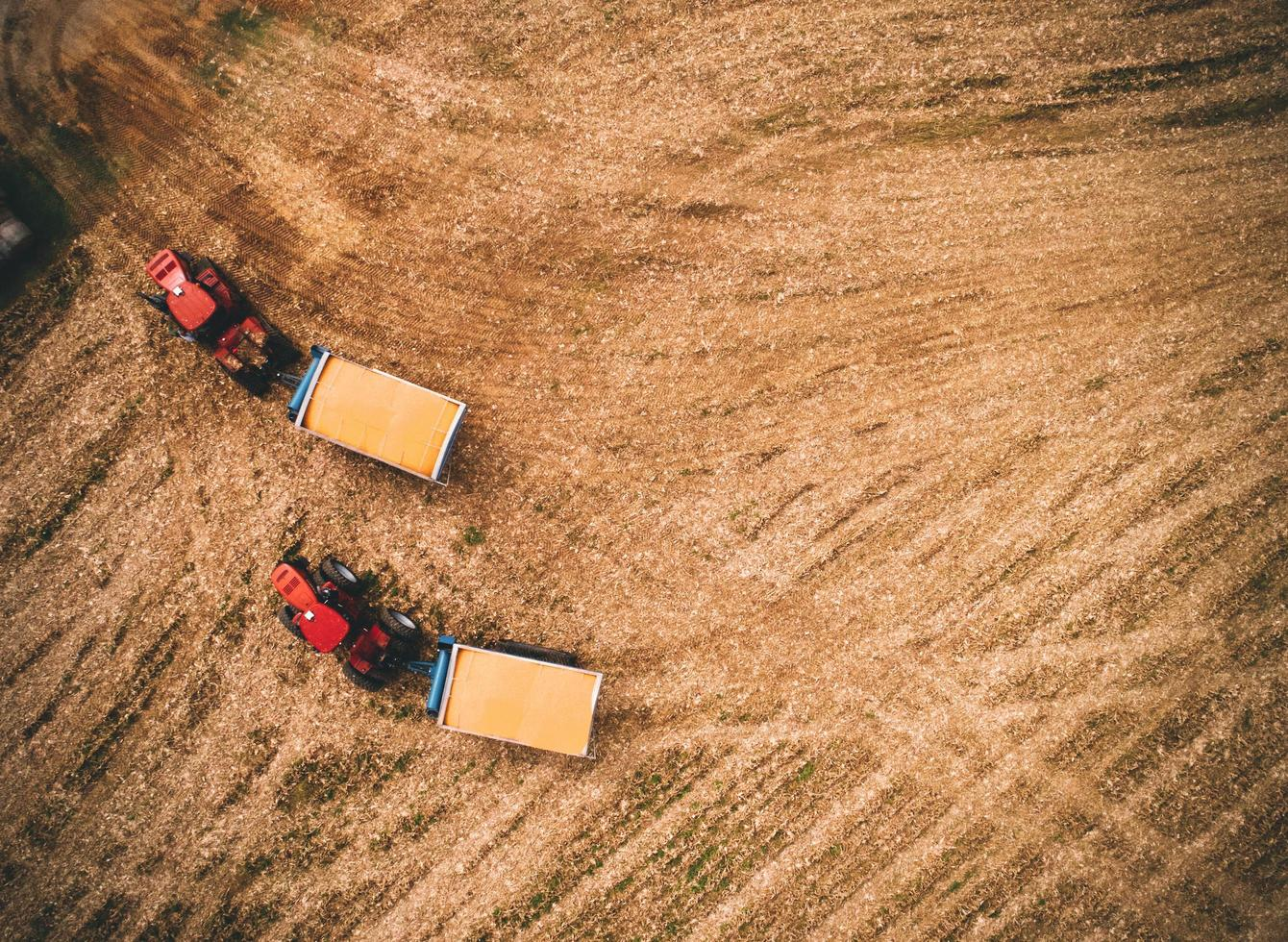 Red tractors on field photo