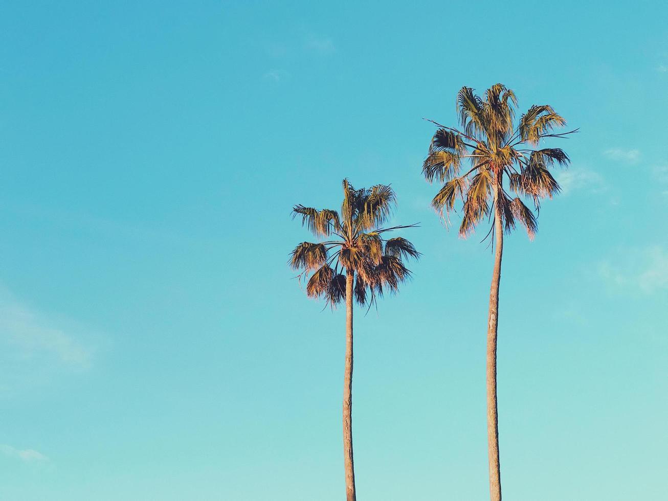 dos palmeras marrones foto