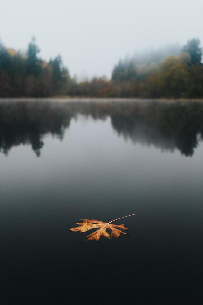 Brown leaf on body of water photo