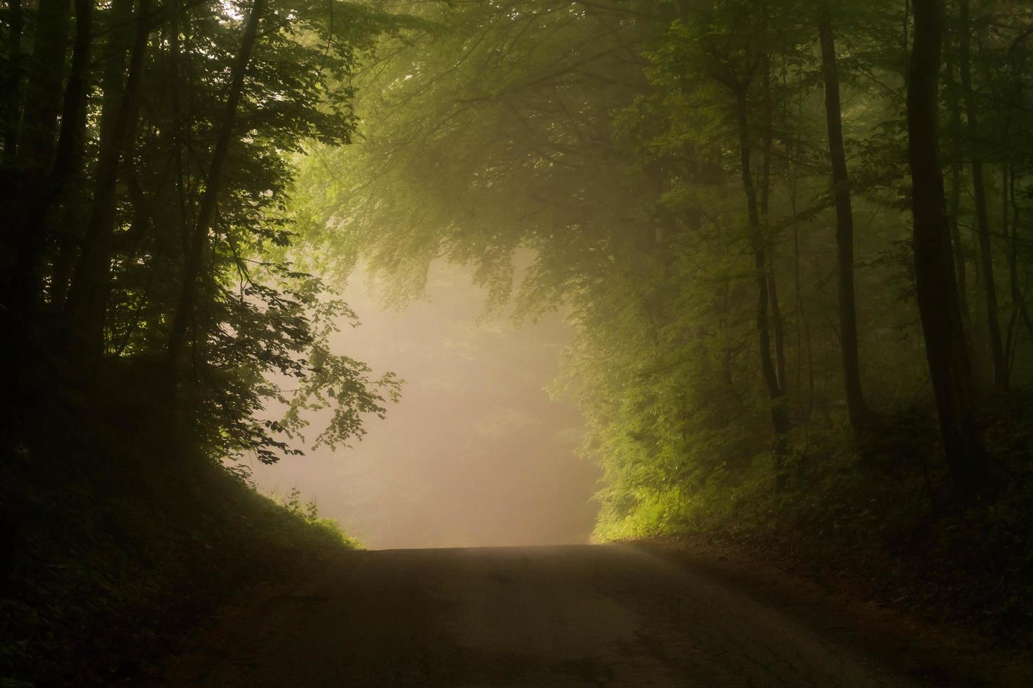 Dirt road thru green forest photo