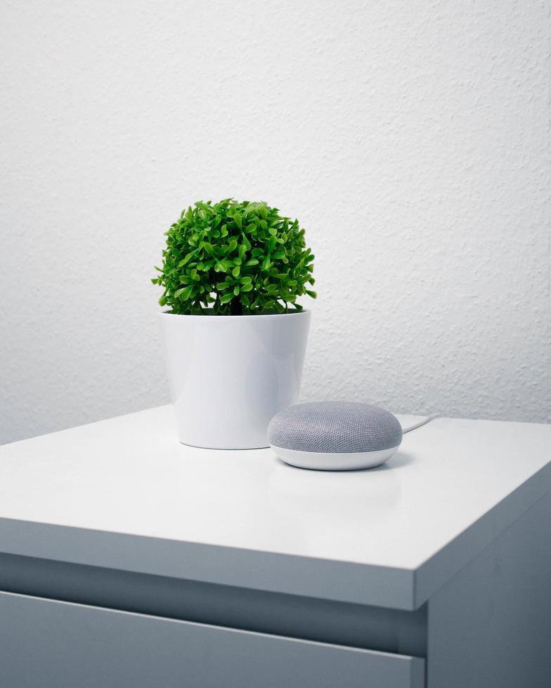 Green leafy plant in white vase photo
