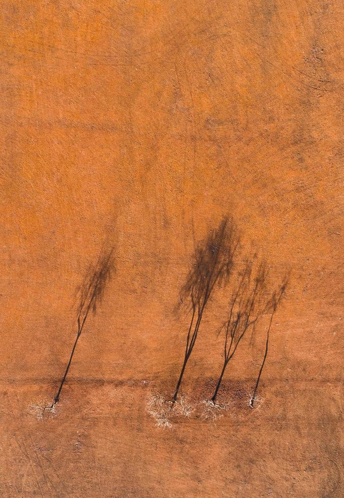 Aerial view of trees in field photo