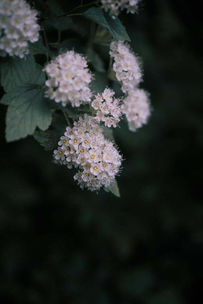 White flowered plant photo
