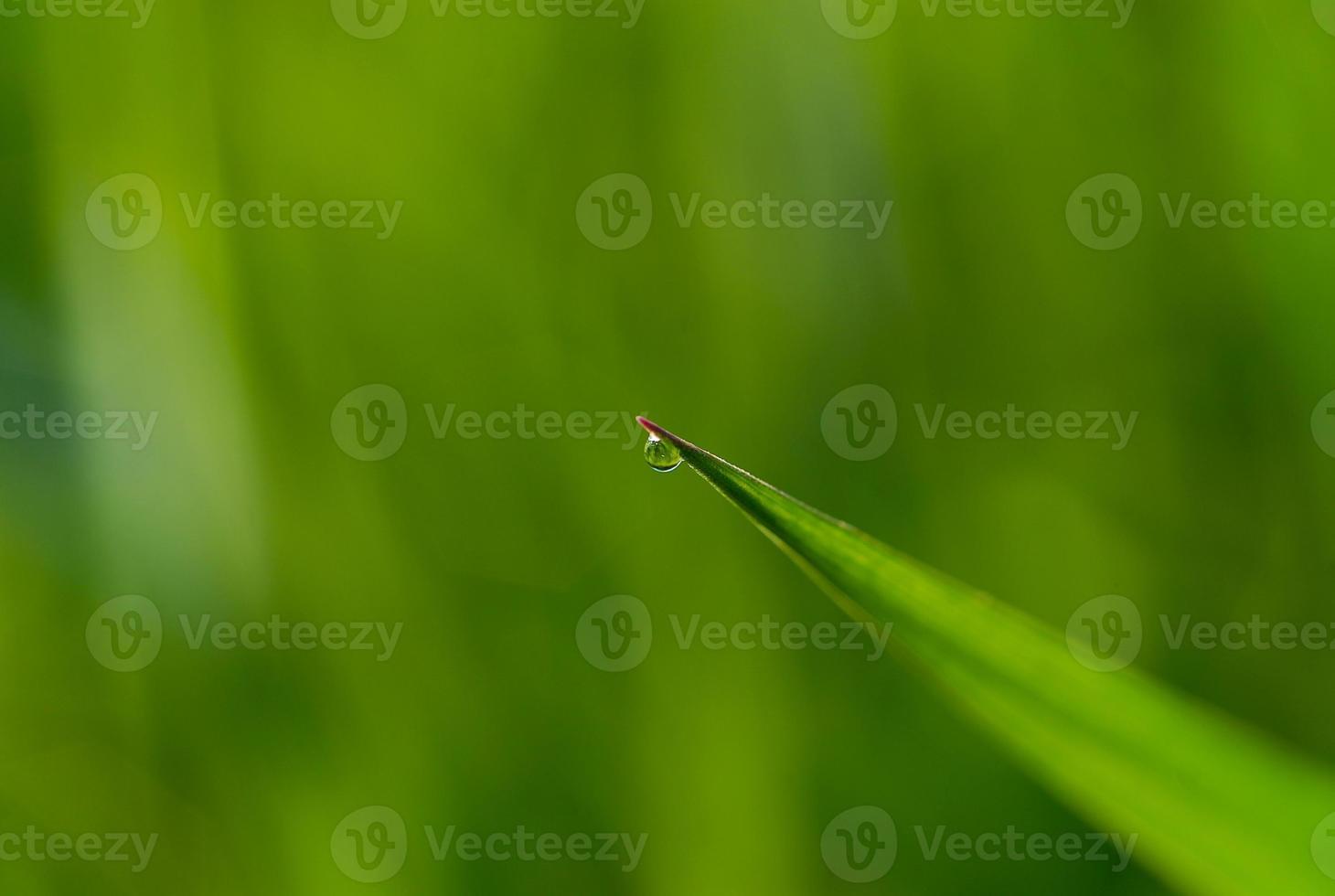 Drop of dew photo