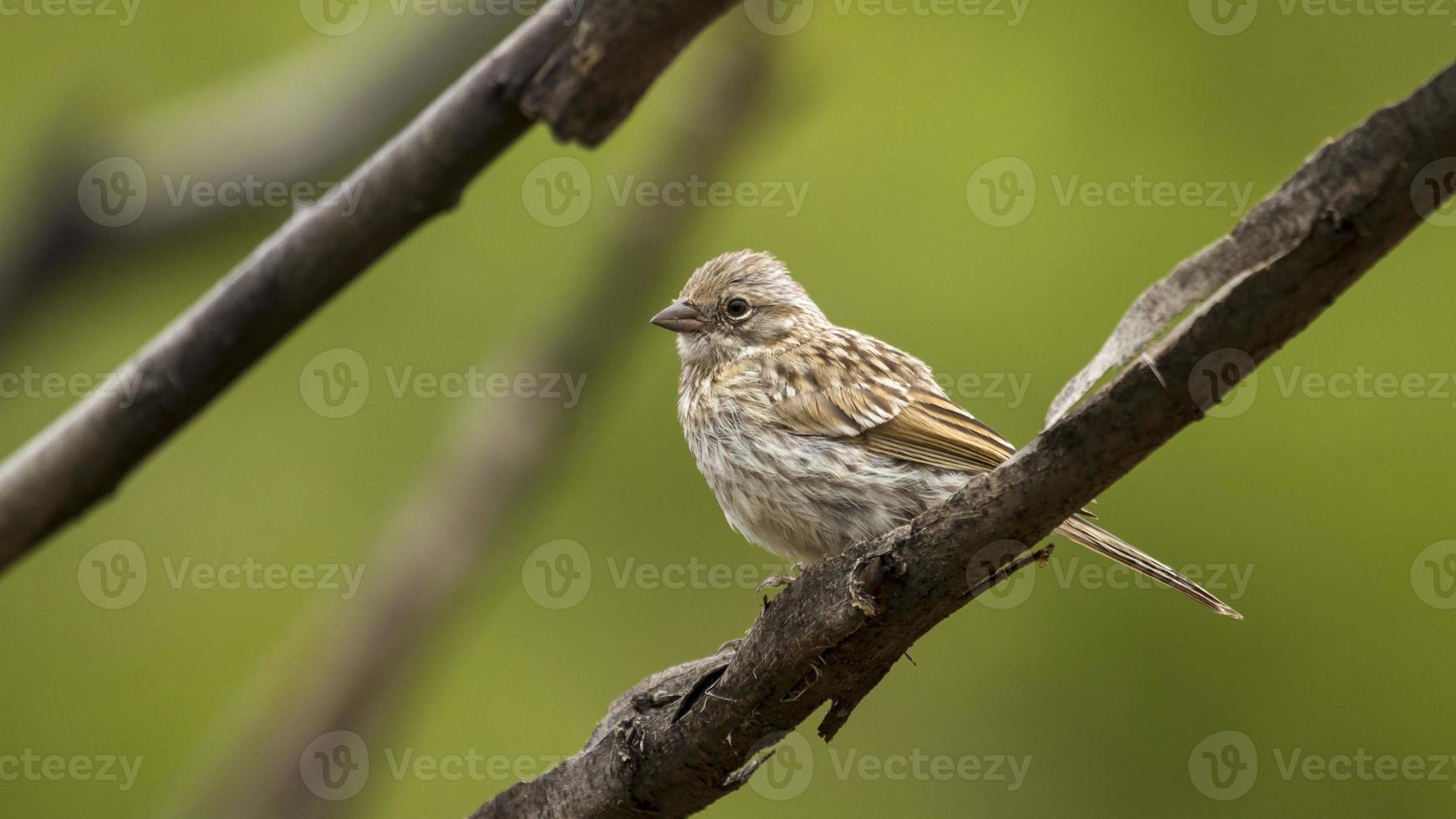 pájaro en una rama foto