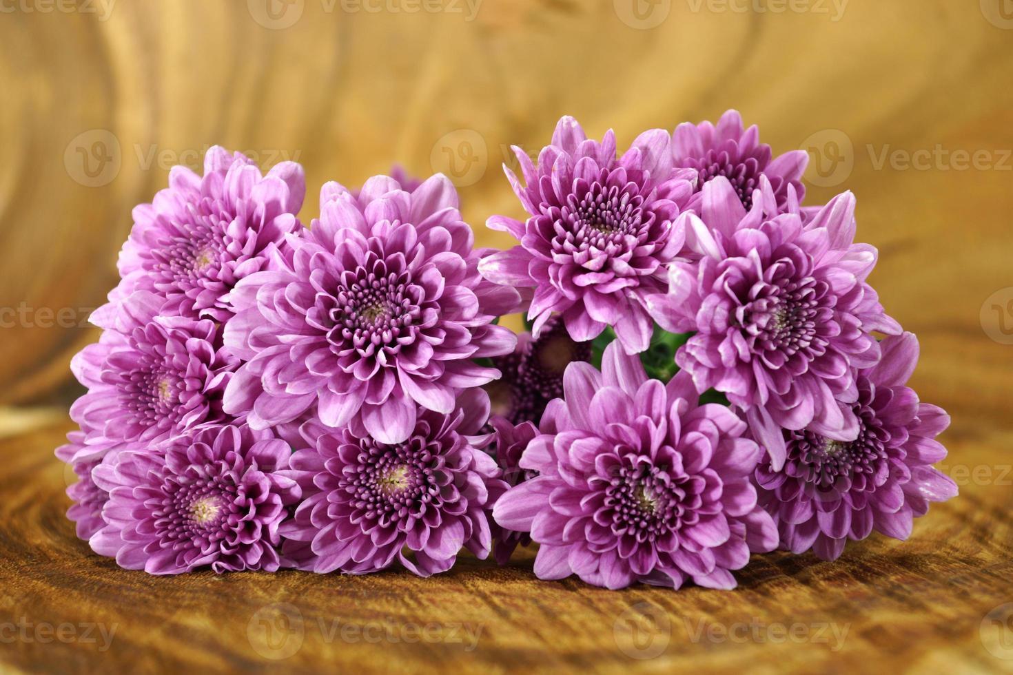 Violet chrysanthemum on wood background photo