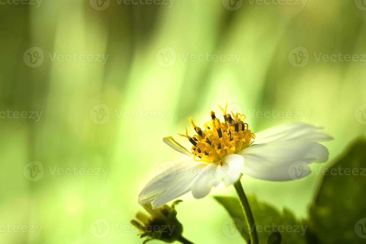flor de cerezo, flores de sakura foto