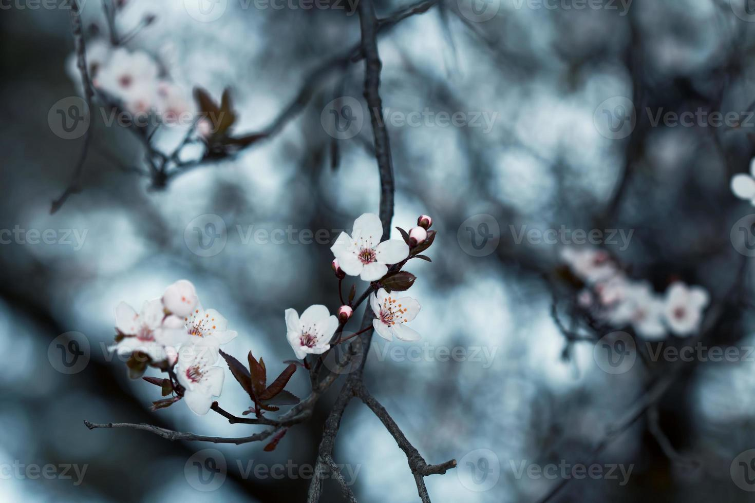 Beautiful blossom, spring in March photo