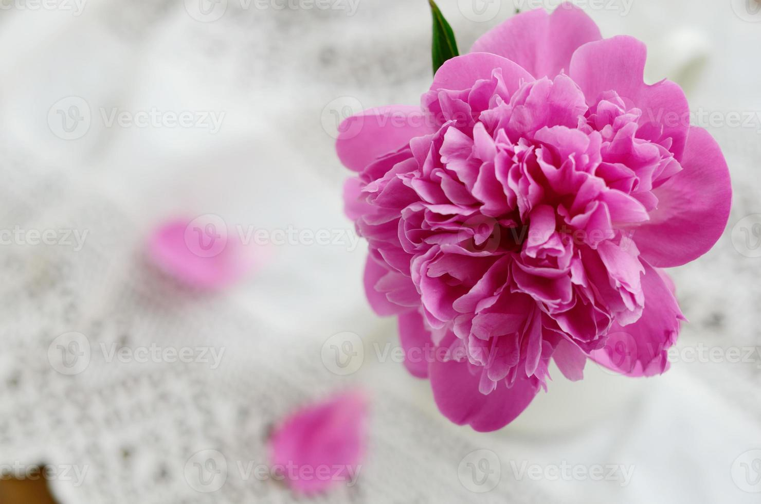 Pink peony in jug on vintage lace tablecloth photo
