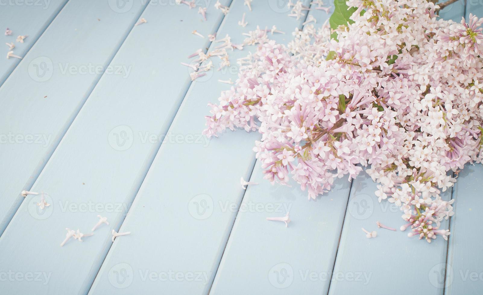 lila floreciente de verano foto