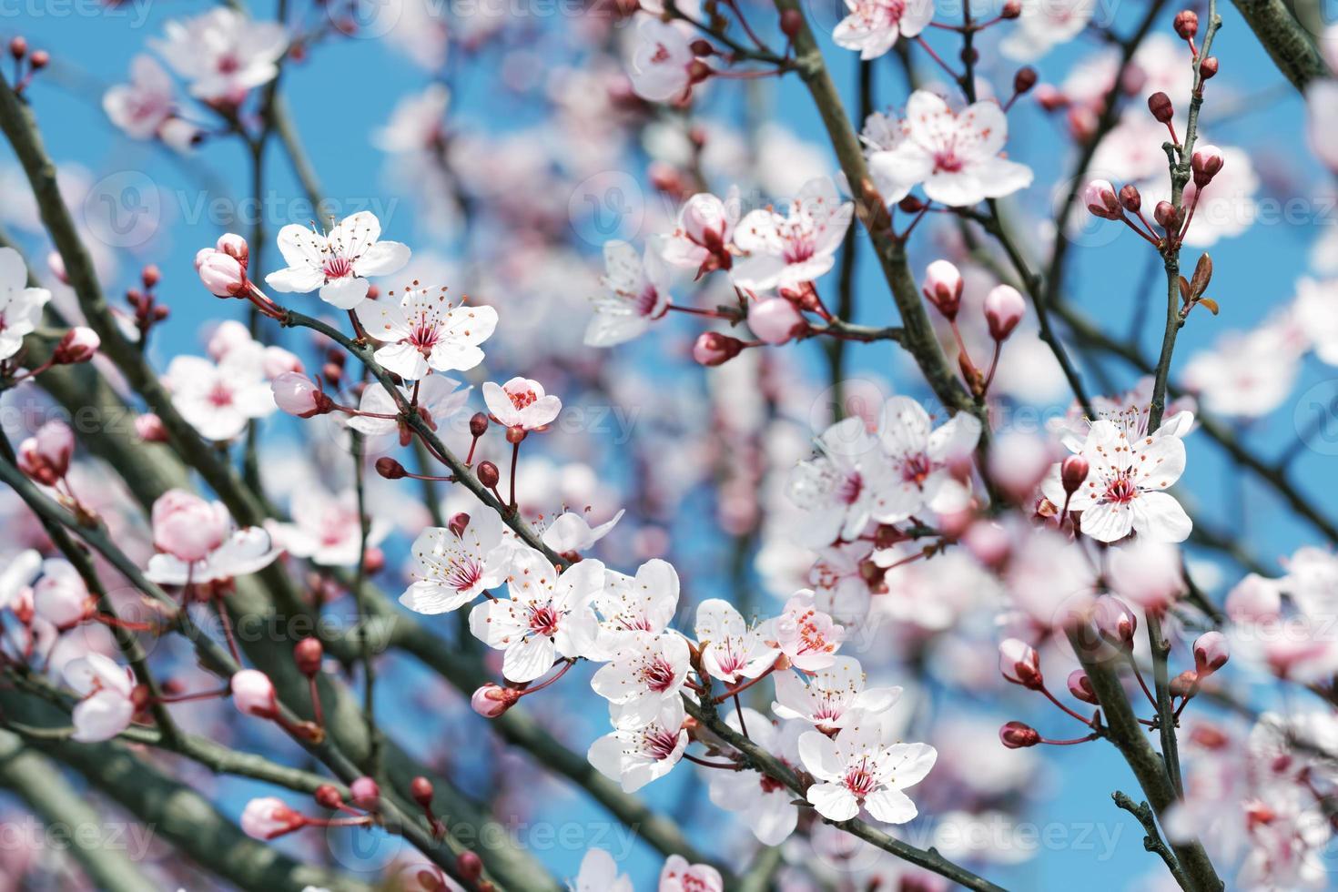 flor de frutas foto