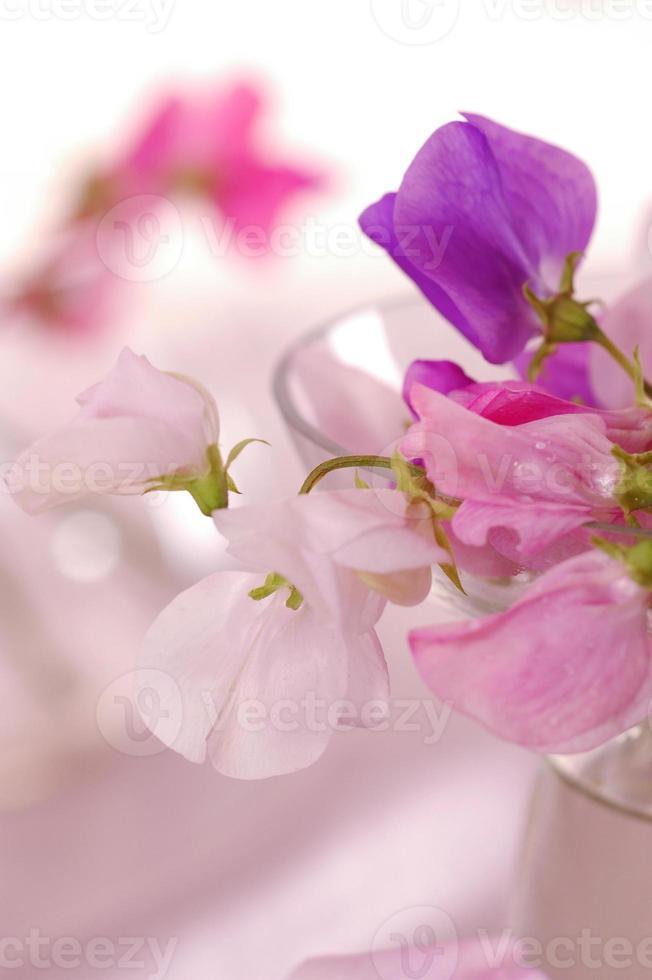 flor de guisantes dulces foto