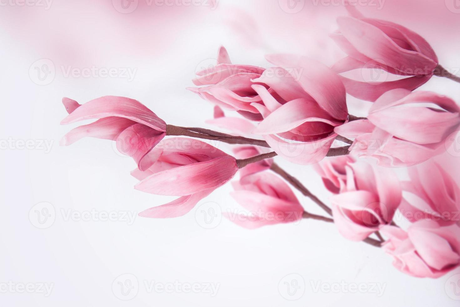 hermosa magnolia. foto