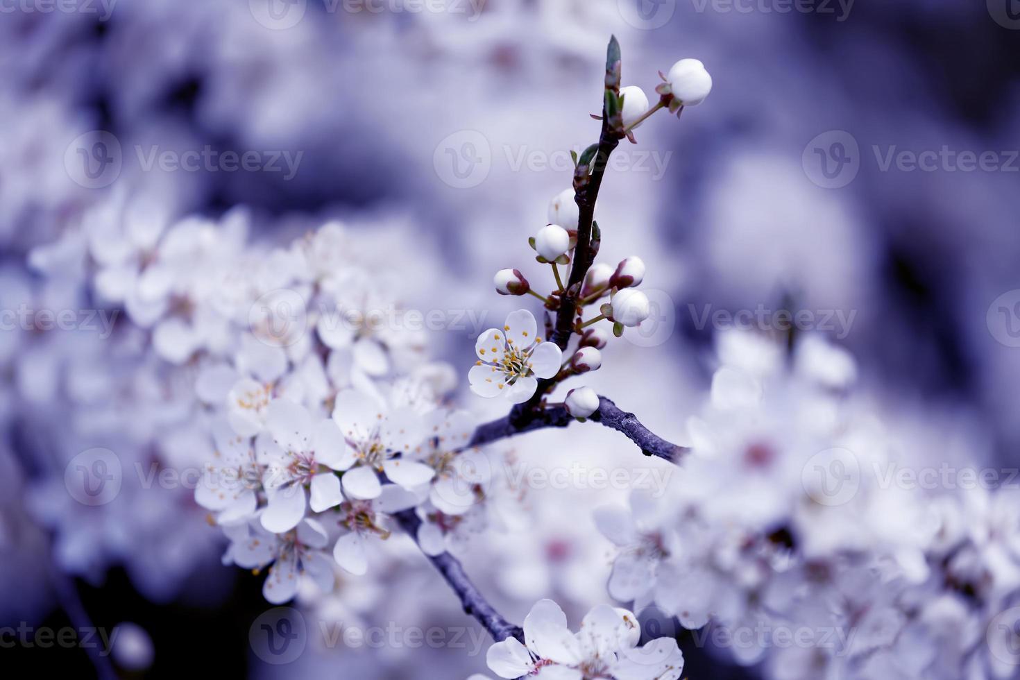 flor de frutas, primavera foto