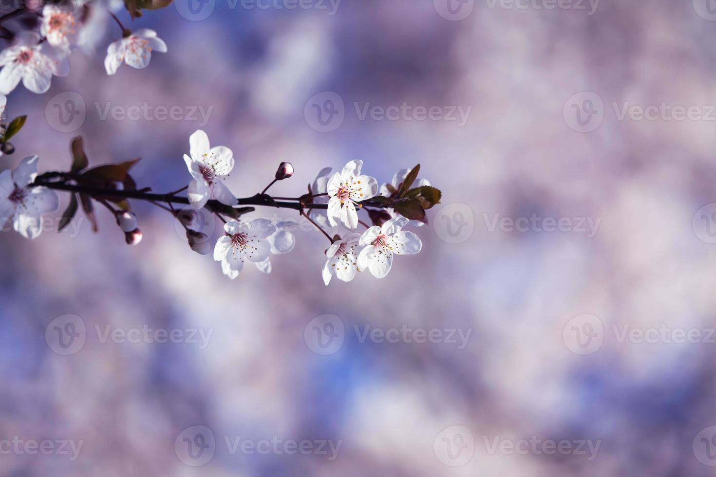florecer foto