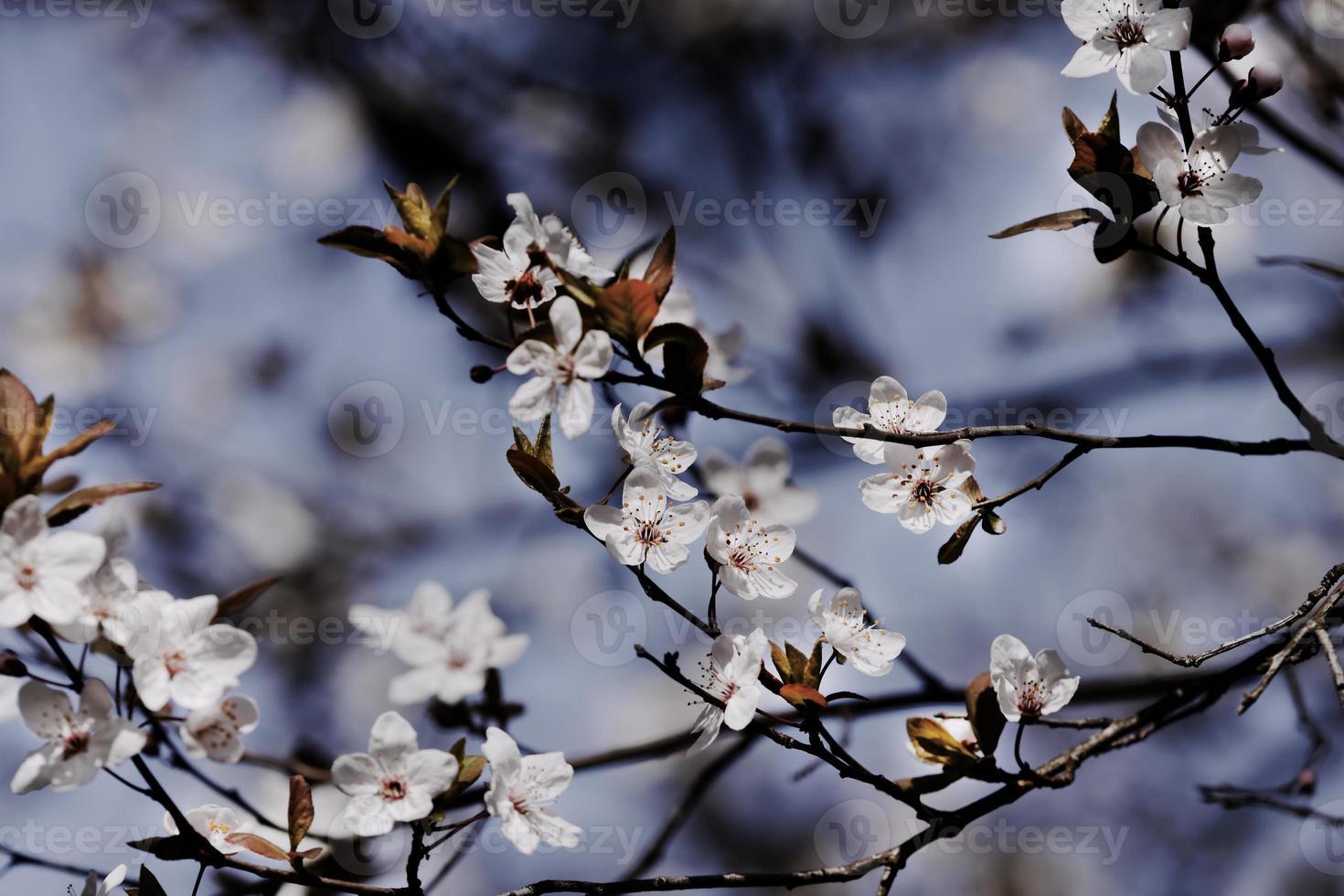 fruits blossom photo