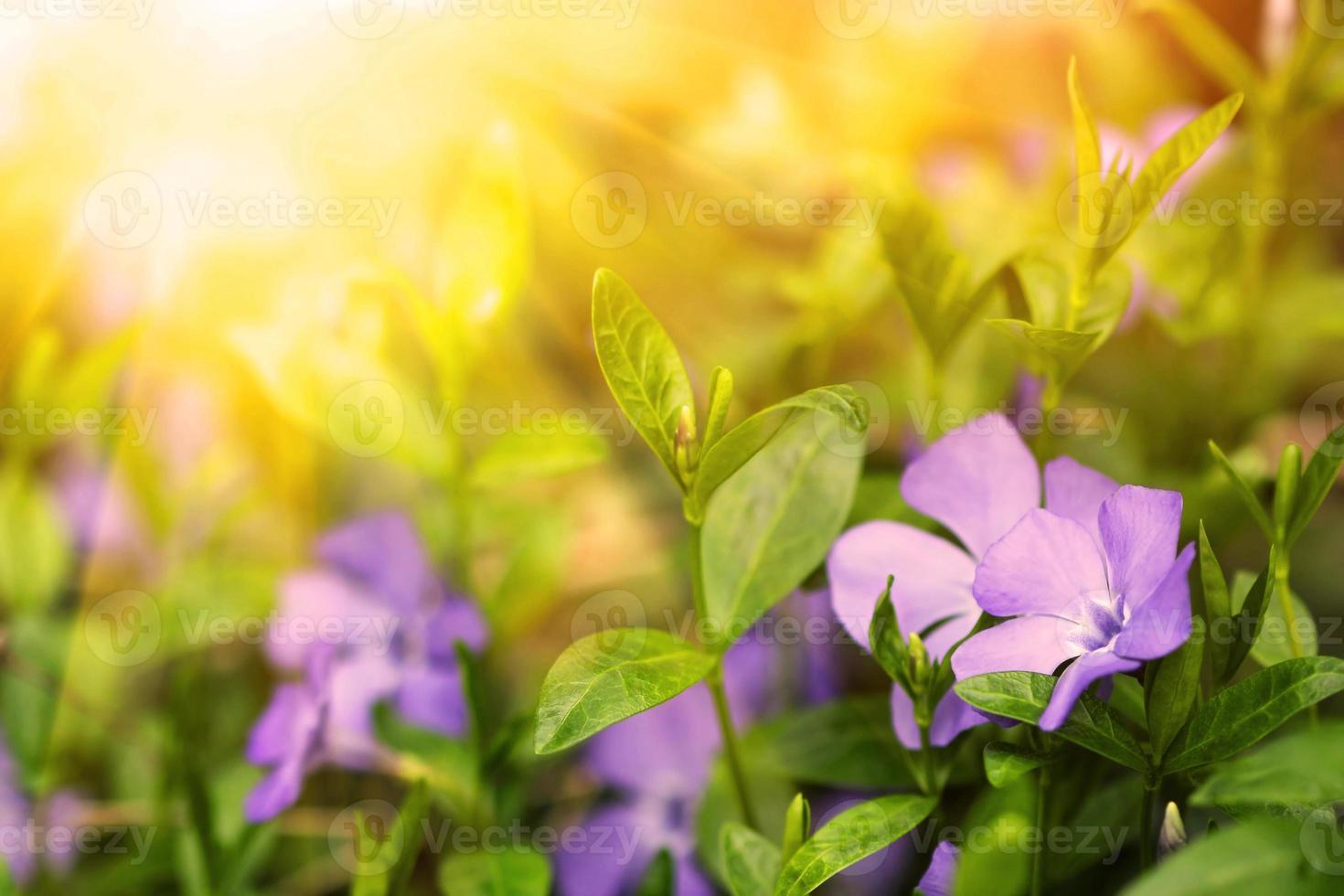 hermosas flores azules en un bosque foto
